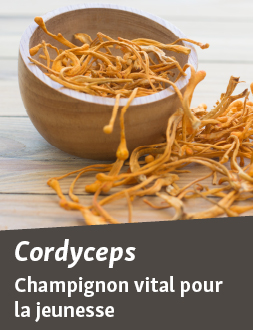 Cordyceps pour la vitalité