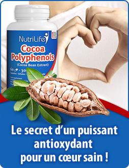 Polyphénols de cacao